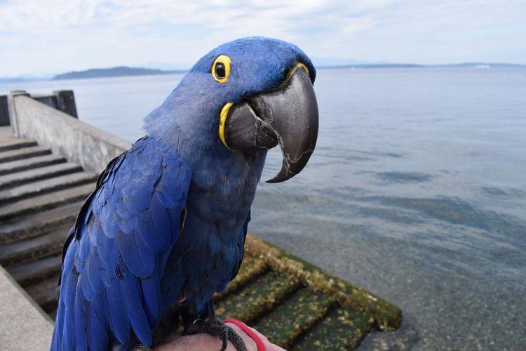 Portrait Parrot, Part Trois. Hy - michaelostrogorsky   ello