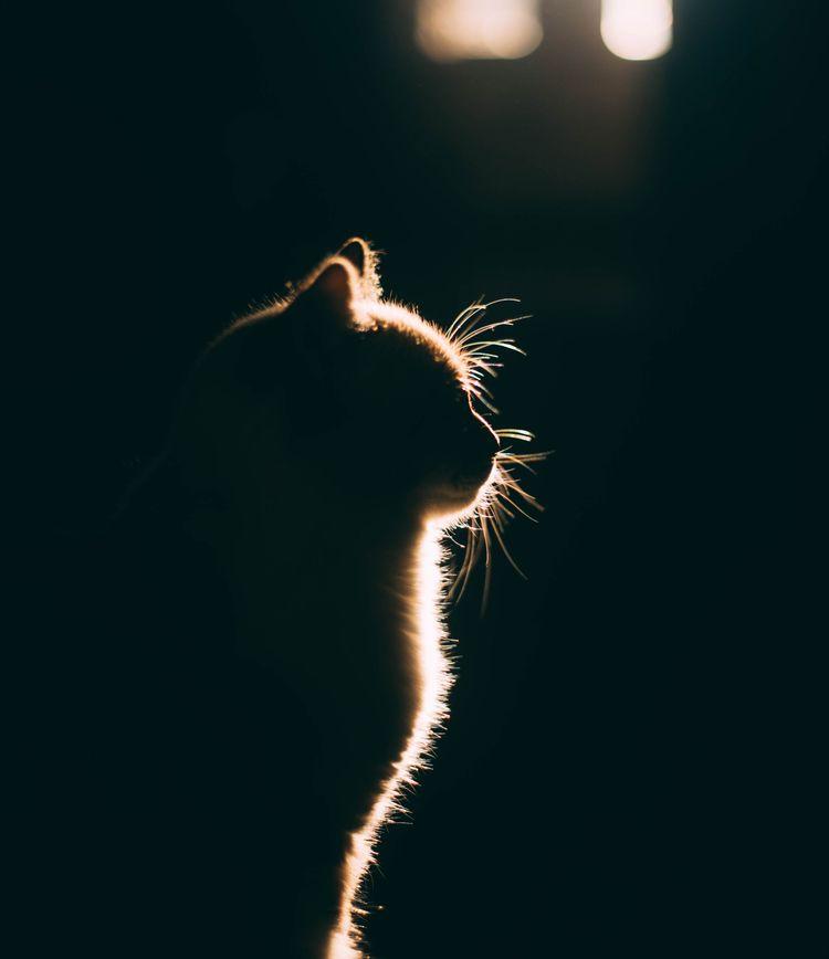 Cat silhouette - cat, dark, tone - oanceaalex | ello