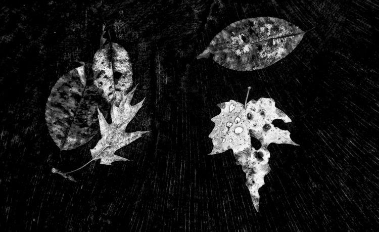 honor fallen  - monochrome, blackandwhite - docdenny | ello