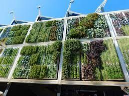 Edible Plants Vertical Garden g - airgrow | ello