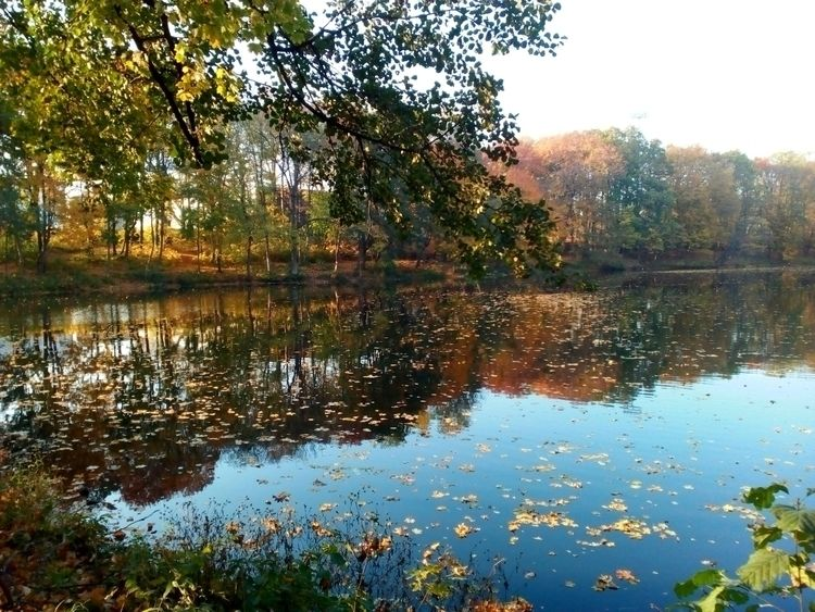 Fall water - autumn, fall, reflection - igenvoicov | ello