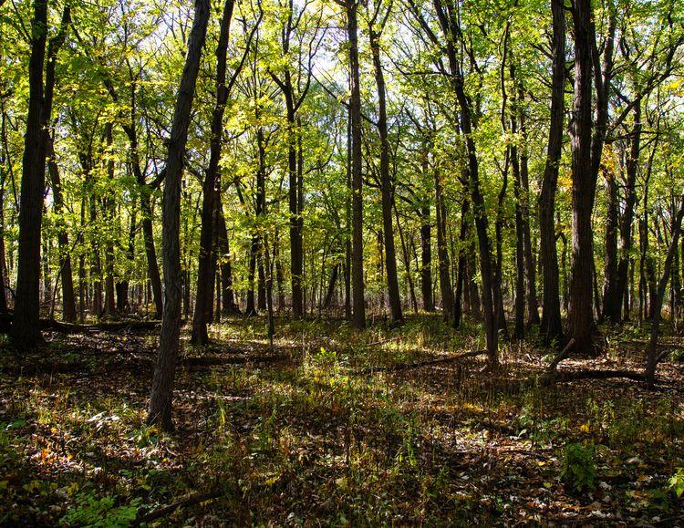 Wood wide web brings life - qui - junwin | ello