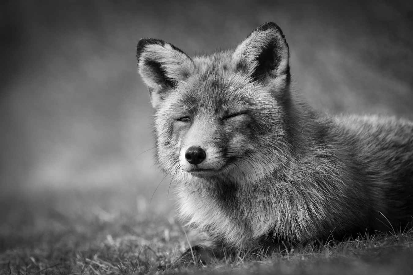 Fox run - bnw, blackandwhite, photography - roelvdw   ello