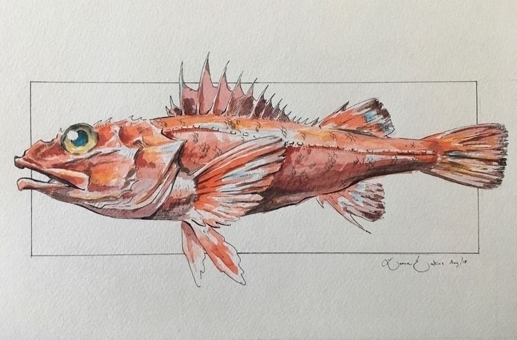 commission fish North Pacific - Shortspinethornyhead - uintatherium   ello