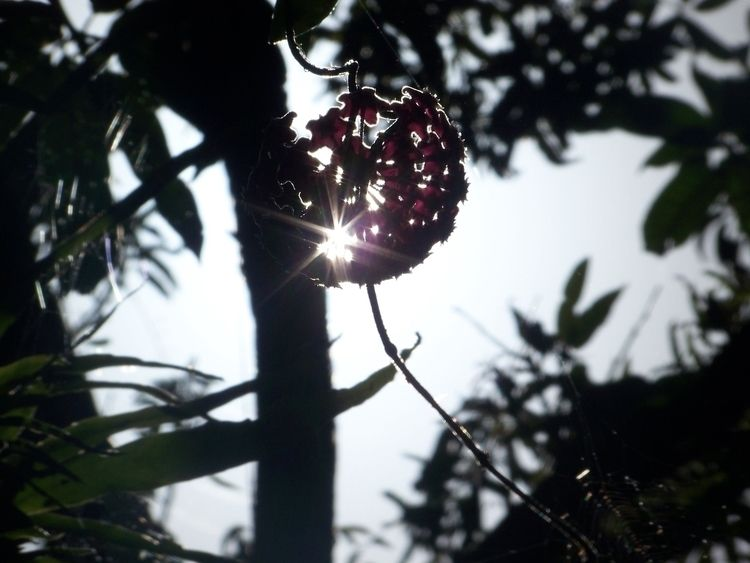 (Photo Doris Diaz - Sunlight, Sublime - dorisdiaz | ello
