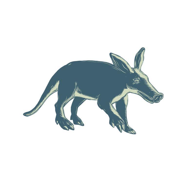 Aardvark Scratchboard Style - illustration - patrimonio   ello