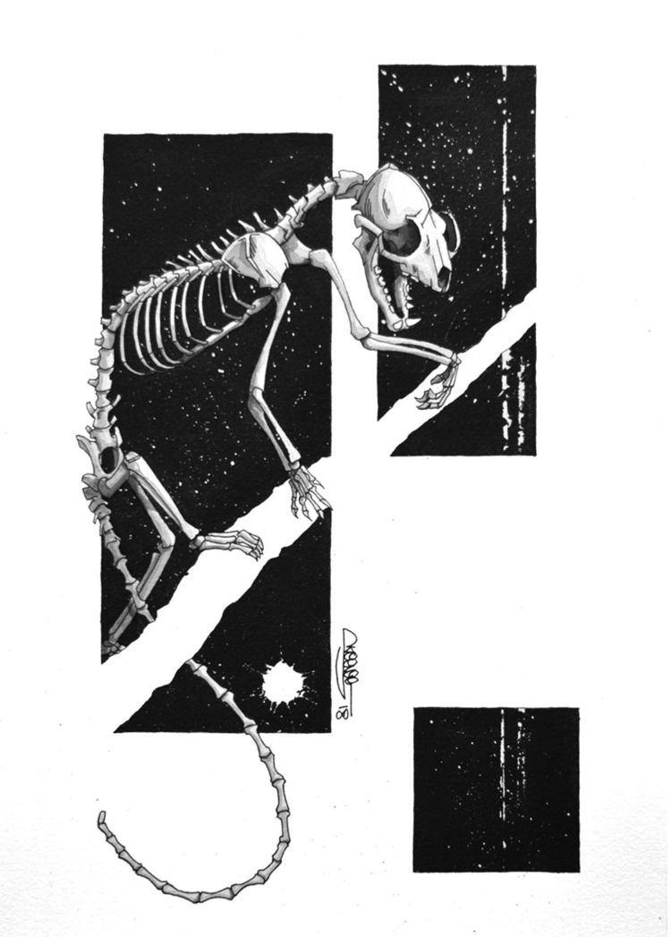 Yellow-throated Marten Skeleton - skeenee | ello