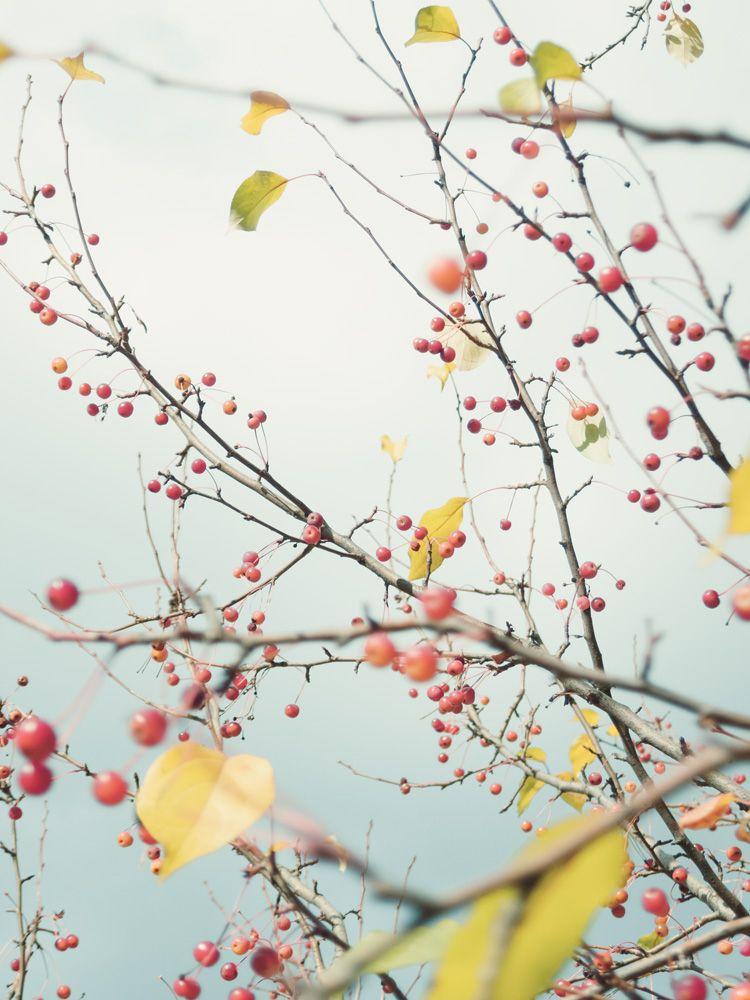Wild apple tree - andreigrigorev | ello