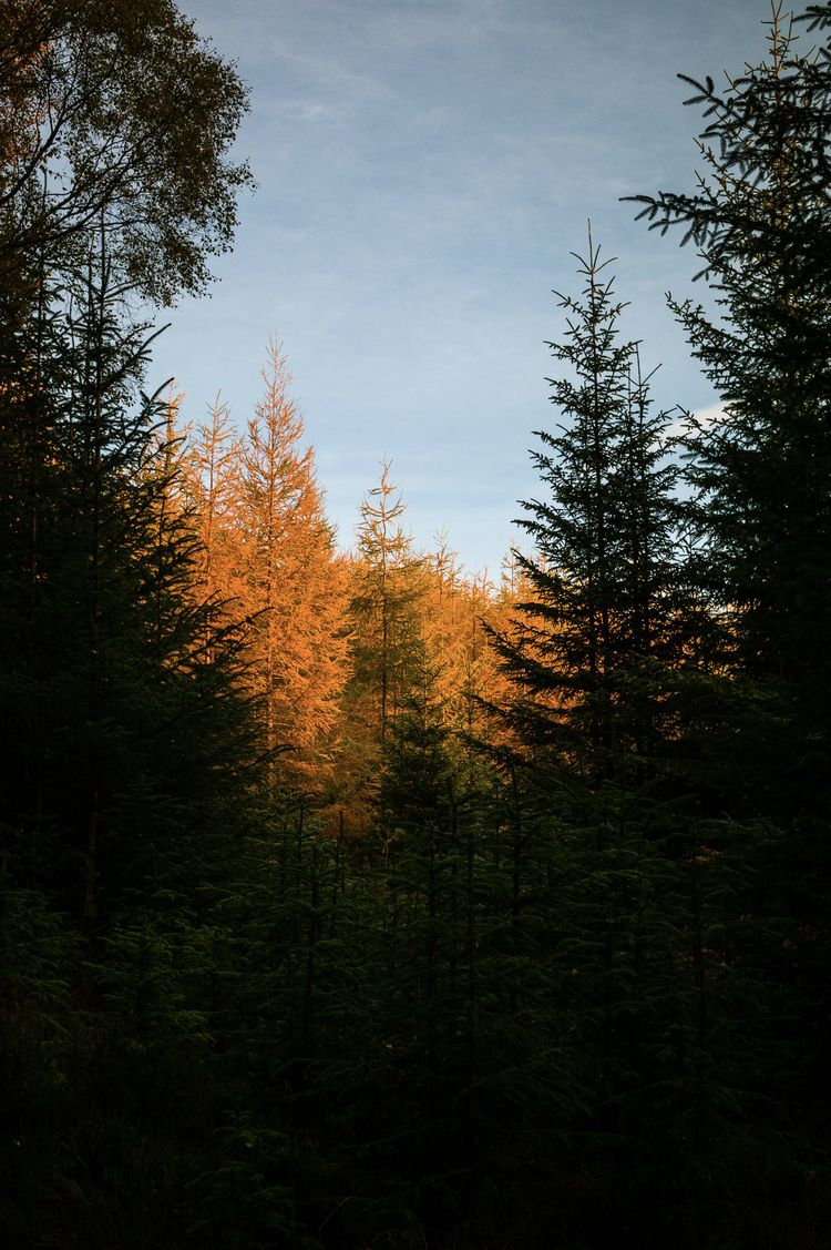 morning, sunrise, forest, trees - dfcf | ello