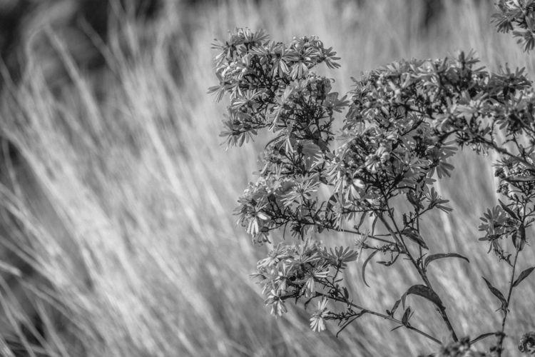 photography, flower, nature_urbanart - urbanart | ello