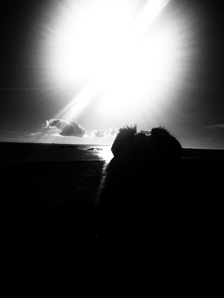 [02/11/18. Silhouette / shape]  - petit_louis | ello