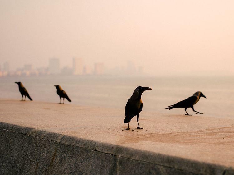 gathering birds Marina Drive. M - jorishermans   ello