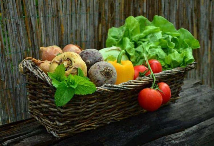 Stay fit enjoy healthy food tas - secretsofhealthyeating | ello