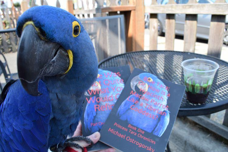 Hyacinth Macaw Princess Tara ad - michaelostrogorsky   ello