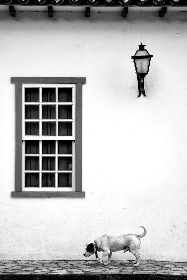 Vira-lata Tiradentes, Minas Ger - george_s_photo   ello