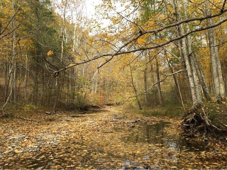 nature, photography, iPhone, fall - pictorific | ello