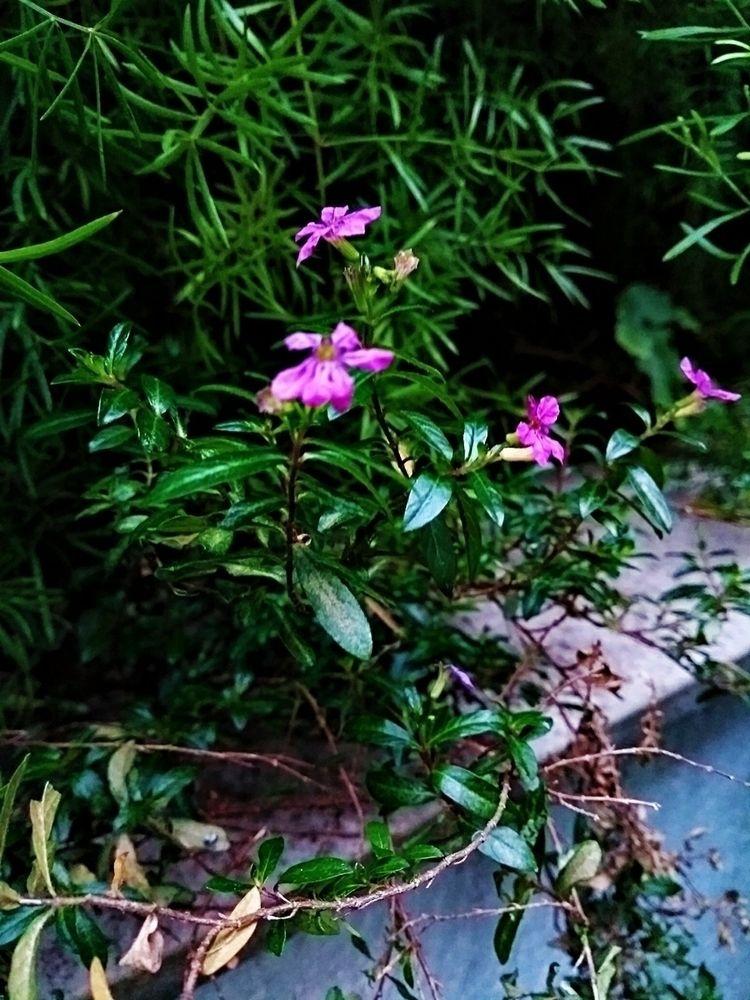 Câmera não ajuda - flower, flowers - giselybelfort | ello