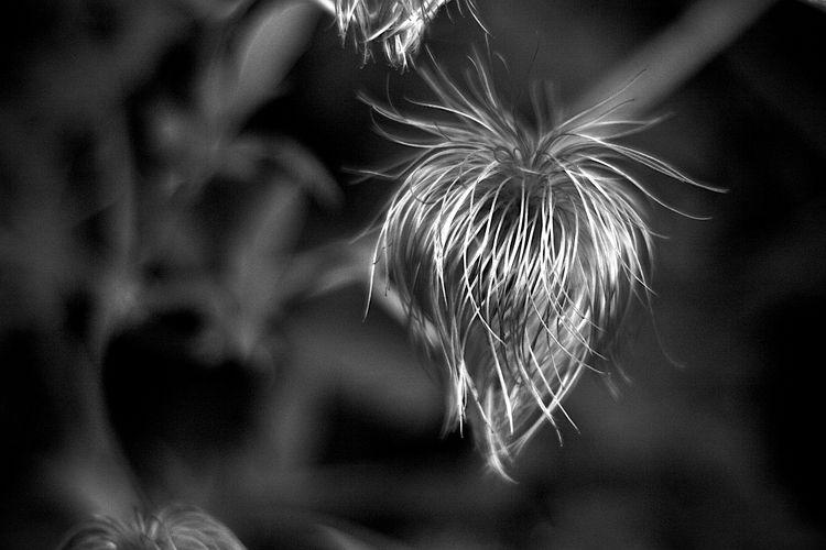 Botanical Monochrome 5589 - flowerphotography - dorian-stretton | ello