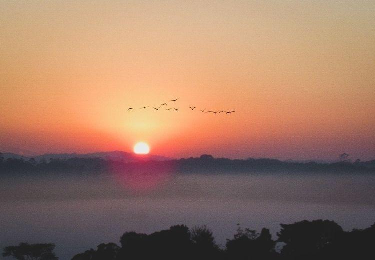 Sun - sun, birds, landscape, landscapelover - felipehelfstein | ello