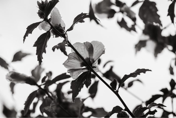 aovbnw, blackandwhite, blackandwhitephoto - kch | ello