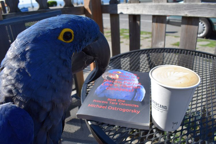 reading weekend? Hyacinth Macaw - michaelostrogorsky   ello