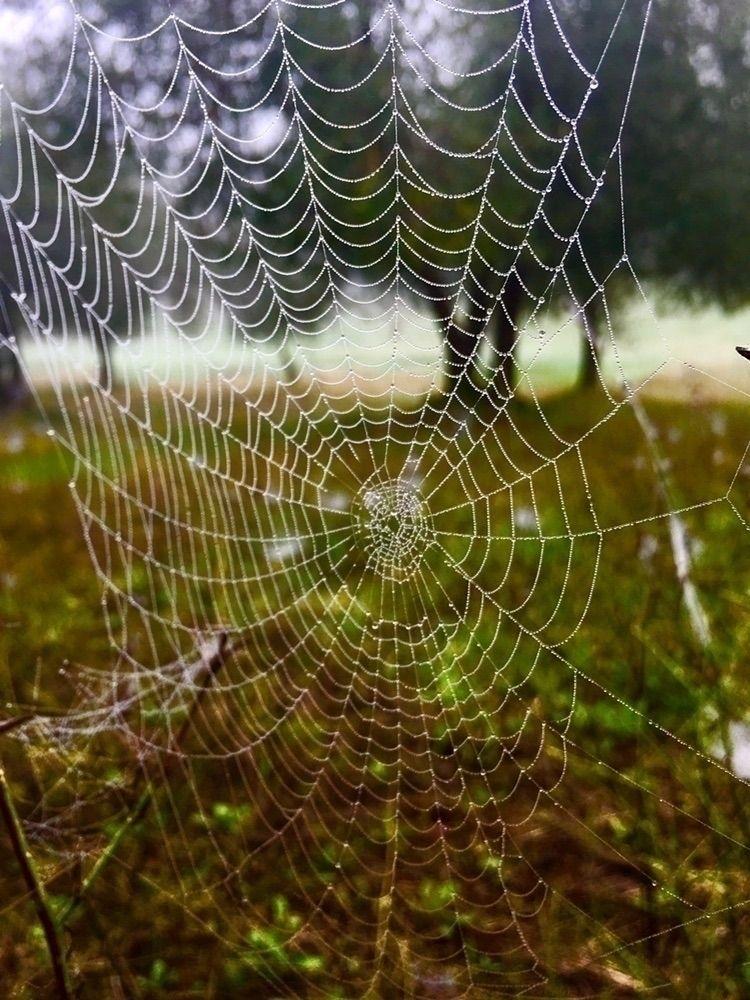 spider, country, tuscani - andreaphotoweb | ello