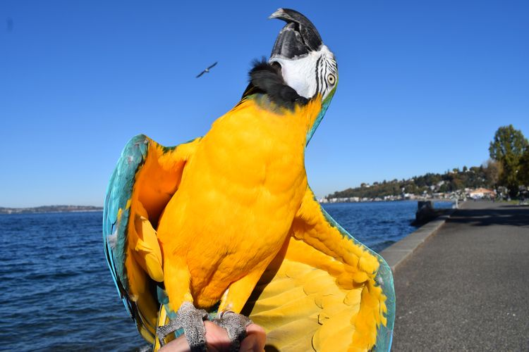 excited weekend Blue Gold Macaw - michaelostrogorsky | ello