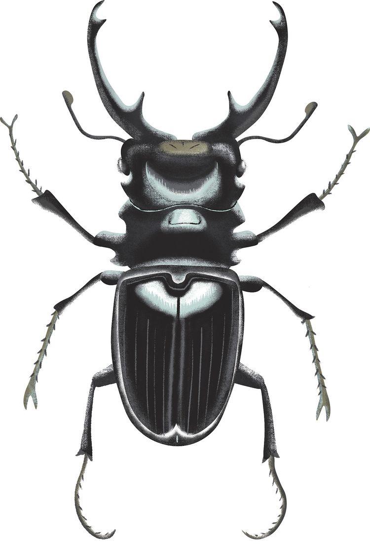 Stag Beetle. key inspired beetl - modernism_is_crap   ello