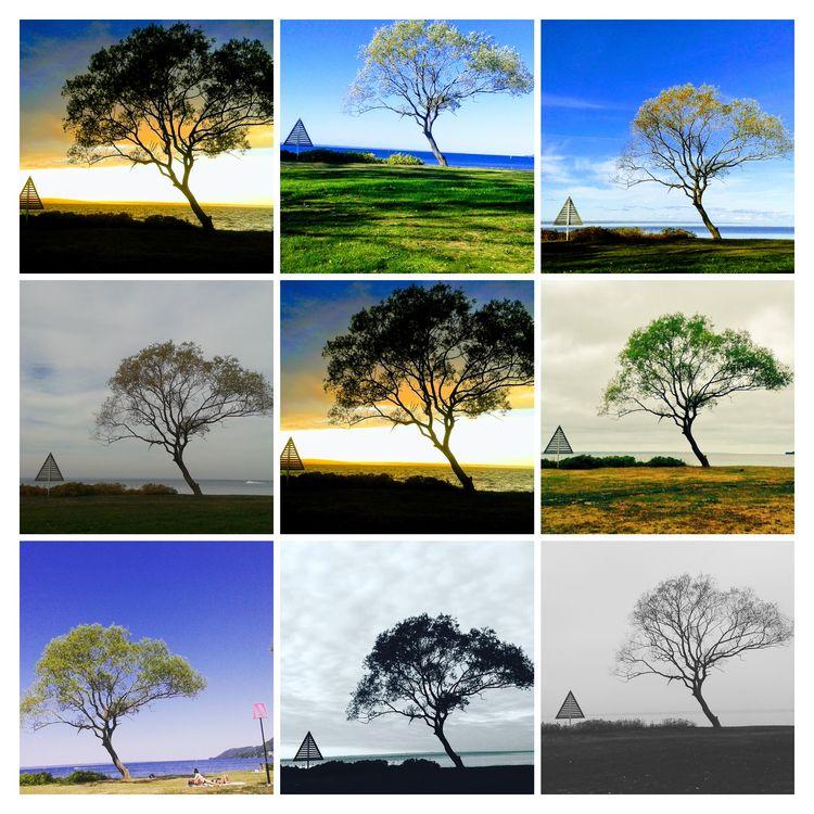 Mellyrn 1 South Wättern.se af - Tree - mellyrn | ello