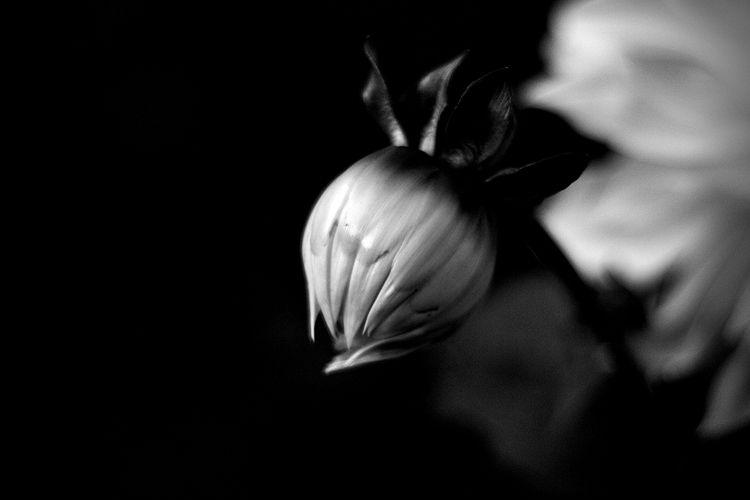 Botanical Monochrome 5629 - flowerphotography - dorian-stretton | ello