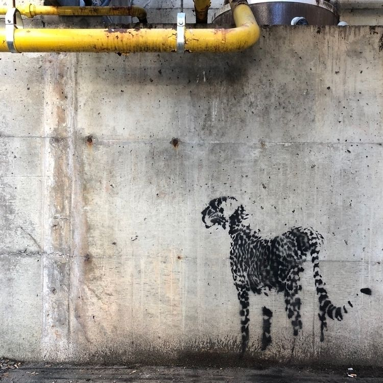 Animalia 16 | Cheetah Lincoln H - twofouronenine | ello