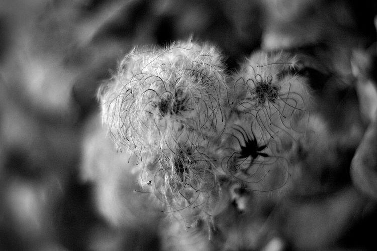 Botanical Monochrome 5632 - flowerphotography - dorian-stretton | ello