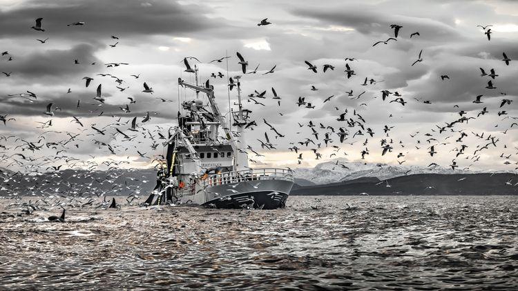 Fish arrived Skjervøy realised  - robertrath | ello