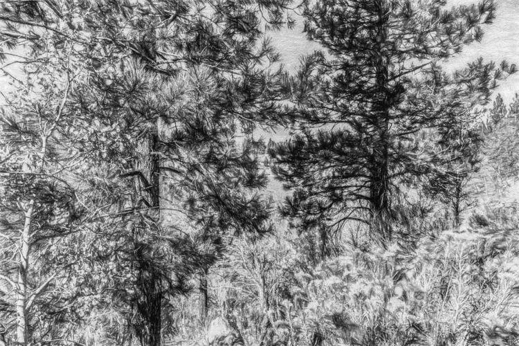 Cover June Lake, Mono County, C - davidseibold | ello