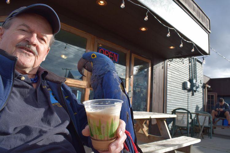 Hanging Hyacinth Macaw Princess - michaelostrogorsky | ello