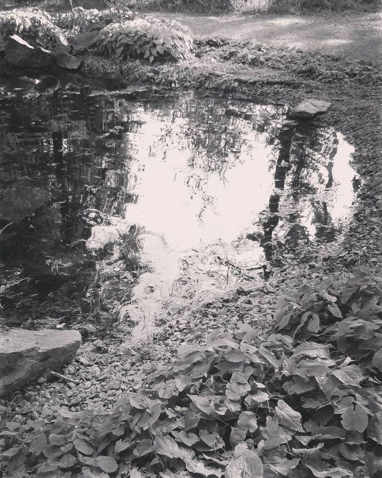 Dammen på Askgravplatsen 33-års - skogskyrkogardar | ello