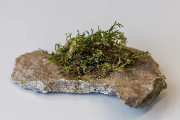 Lowly Plant Copy Cannabis Meet  - ellocannabis | ello