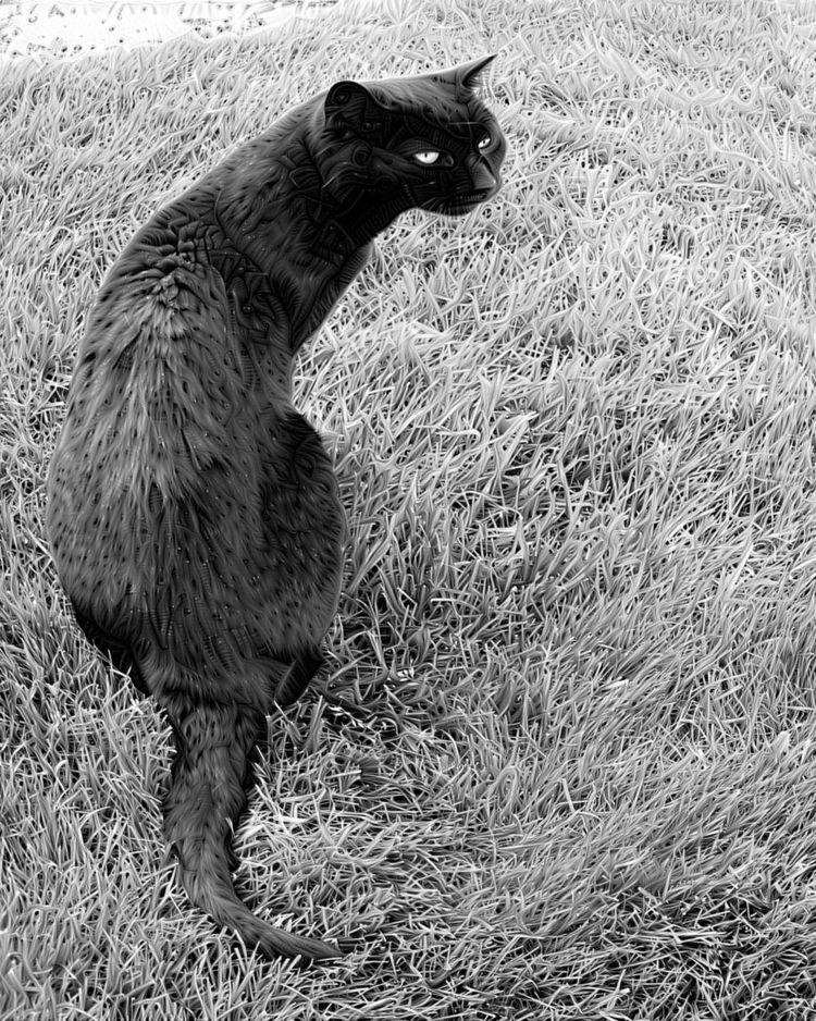 Spooky - photography, cat - kenlong | ello