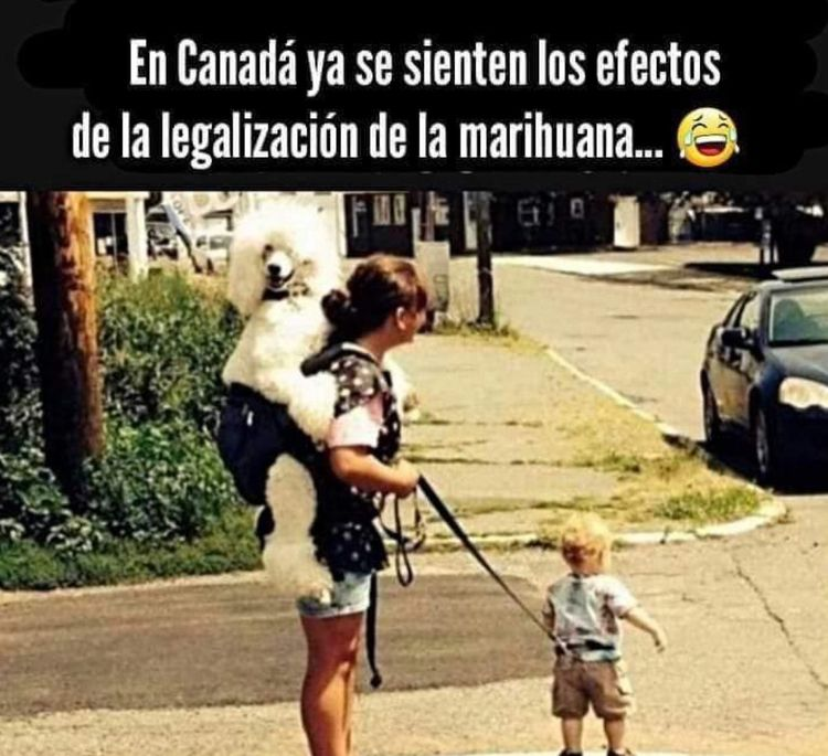 Canada, feeling effects Marijua - ellocannabis | ello