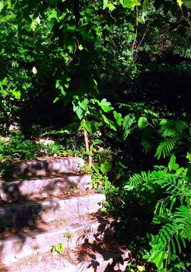 Abandoned Jungle Steps - green, stairs - ranjiroo | ello