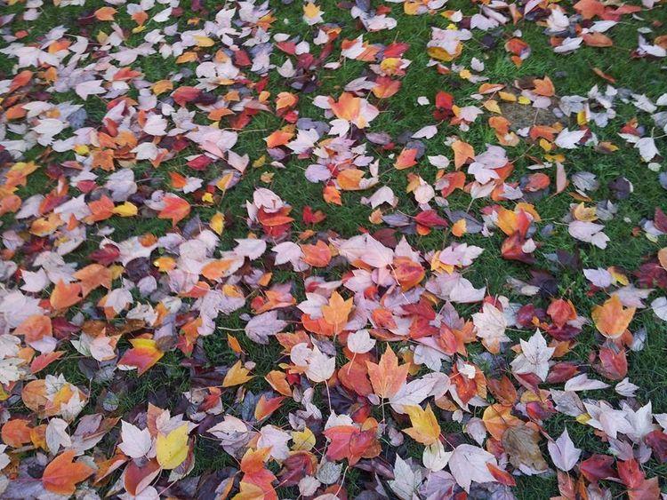 Fall Vancouver - pinkflamingomtl | ello