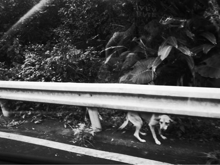 life, monochrome, streetlife - kendou0508   ello