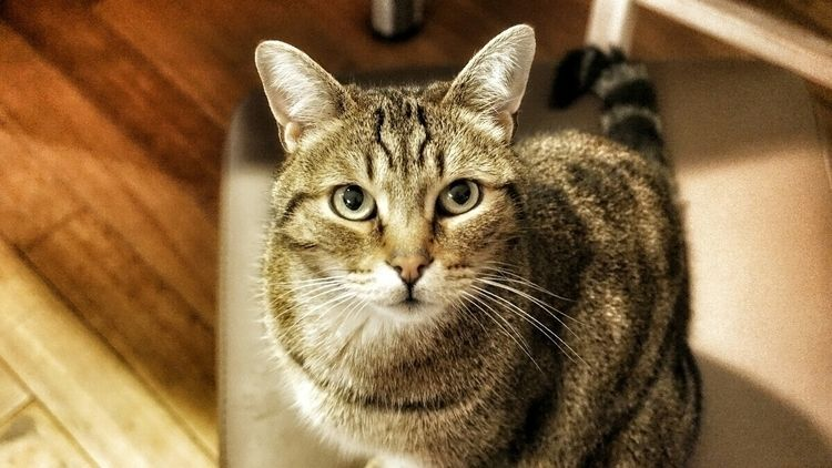 cat - a6000, sony - wllmmnc | ello