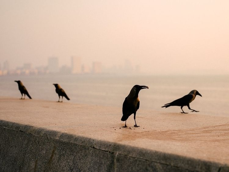 gathering birds Marina Drive. M - jorishermans | ello