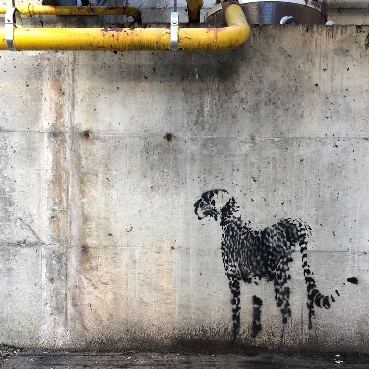 Animalia 16c | Cheetah Lincoln  - twofouronenine | ello