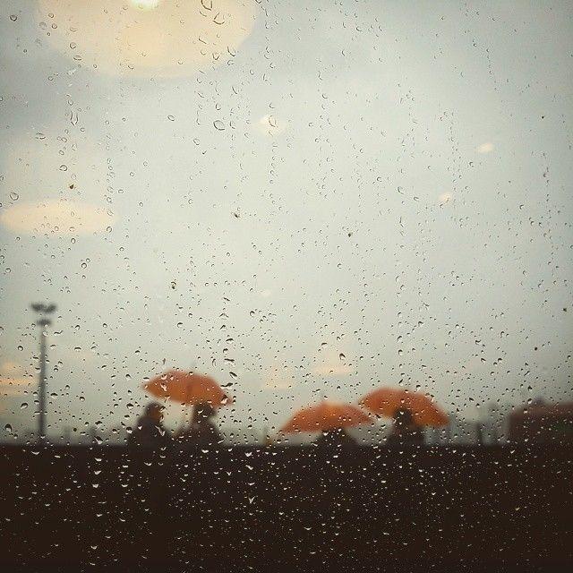 mushrooms, rain - gepetdo | ello