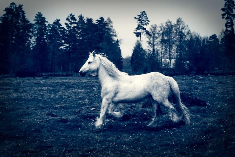 Magic - horse. - boel | ello