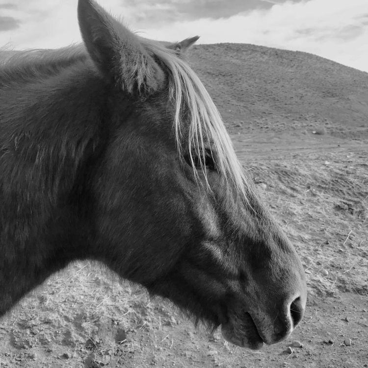 horses, nevada, western - erinoreilly | ello