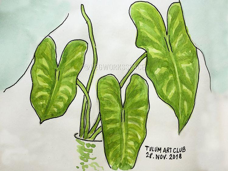 Tropical Plant - veganworks | ello