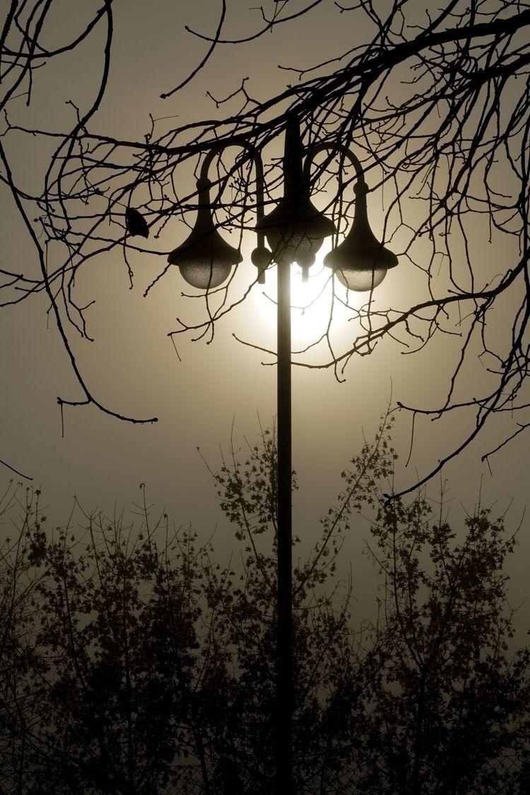 Fog Stories (24/11/2018 - fogstories - einmaedchenimwalde | ello